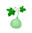 A Bottle Gourd Plant on White Background vector image vector image
