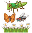 isolated picture different insects vector image vector image