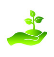hand holding seedlings with leaves or palm vector image vector image