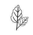 sketch contour of wavy two leaves plant vector image vector image