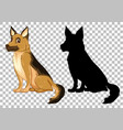 cute german shepherd and its silhouette on vector image