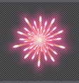festive firework bursting salute isolated on vector image