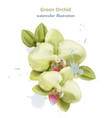 orchid flowers watercolor isolated vector image vector image
