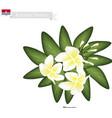 Plumeria Frangipanis A Popular Flower in Kiribati vector image vector image