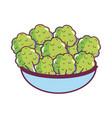 broccoli fresh tural food vector image
