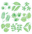 different tropical leaves summer green exotic vector image vector image