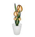 beautiful yellow tulip flowers in a flowerpot vector image vector image