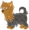shaggy australian silky terrier vector image