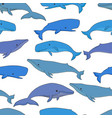 cartoon sea whale and sperm whale seamless vector image vector image
