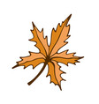 maple leaf icon hand drawn print sticker vector image