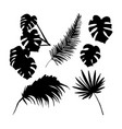 palm leaves silhouette set vector image