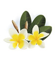 plumeria flowers vector image vector image