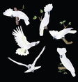six white-cocked cockatoo in various poses vector image vector image