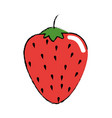 strawberry fruit food vector image vector image
