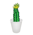 Three Cactus Plant and Flower in Flowerpot vector image vector image