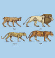 wild cats set lynx lion leopard and tiger vector image vector image