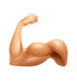 man arm muscle isolated on white vector image