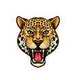 jaguar head isolated cartoon mascot design vector image vector image