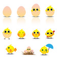 cute bachicken cartoon set vector image