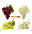 grapes 3d realism and engraving styles vector image vector image