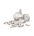 Hand drawn onions vector image vector image