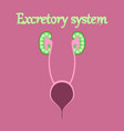 human organ icon in flat style excretory system vector image vector image