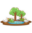 isolated picture duck and frog in pond vector image vector image