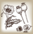 poppies set hand drawn in sketch style vector image