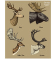 reindeer moose eurasian elk doe roe deer and vector image