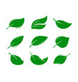 green leaf logo or label natural product nature vector image vector image