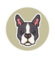 mascot boston terrier dog vector image vector image