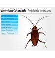 Periplaneta Americana- Cockroach vector image vector image