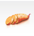 realistic sweet potato on a white background vector image vector image