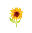 sunflower flower floral icon realistic cartoon vector image vector image