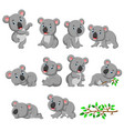 collection happy koala with various posing vector image vector image
