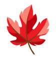 autumn maple leaf vector image vector image