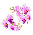 branch orchids purple and white flowers vector image vector image