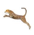 jumping jaguar clipart big cheetah cat cartoon vector image vector image