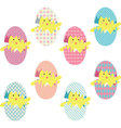 Easter Chicks Eggs Collections vector image