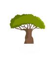 baobab tree icon flat style vector image vector image