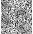 black and white seamless background with dahlia vector image vector image