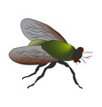 colorful housefly musca domestica vector image vector image