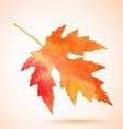 Orange watercolor maple leaf vector image vector image