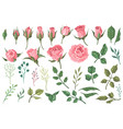 rose elements pink flower buds roses with green vector image vector image