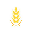 agriculture wheat logo template icon deign vector image