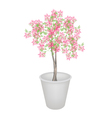 Beautiful Pink Flowering Plants in Flower Pot vector image vector image