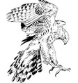 bird prey eagle hawk falcon vector image