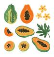 summer set with papaya vector image