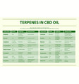 terpenes in cbd oil horizontal vector image vector image