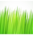 green background frame with realistic herbs